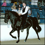 Crusher winning class at 2006 RMH International Show